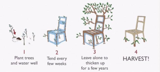 technique-de-pousse-support-arbre