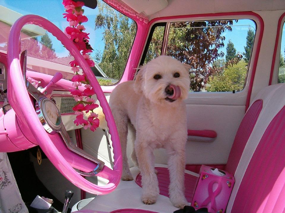 Intérieur de voiture rose customisé par une amatrice de tuning