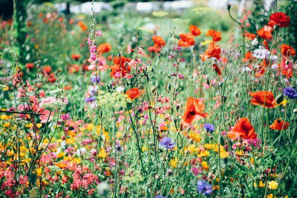 5 fleurs de Bach