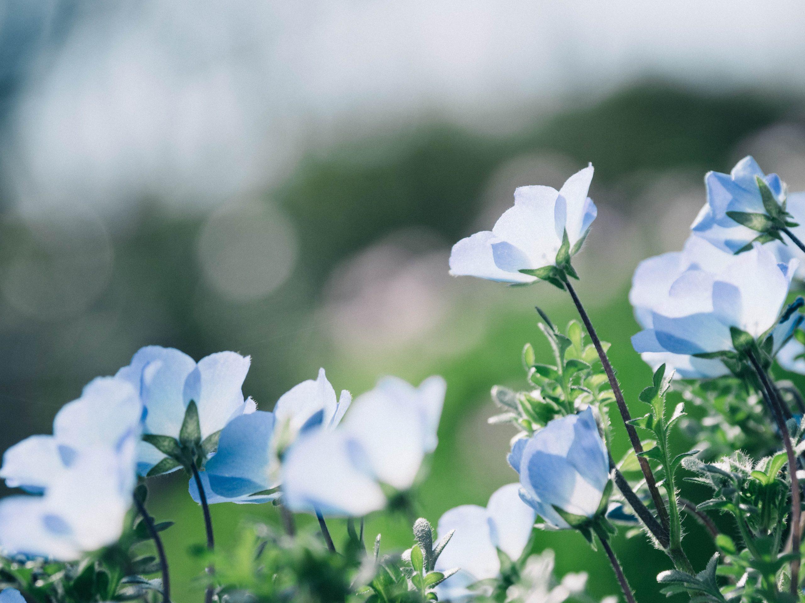 Fleurs de Bach à connaître